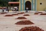 Drying cocoa beans / Chuao /Venezuela /Aragua State.