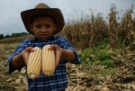 A young boy holds up corn in the fields of El Maizal communes. Five hundred hectares of corn are harvested collectively, while 500 more are made available for small-scale production. (aporrea.org)