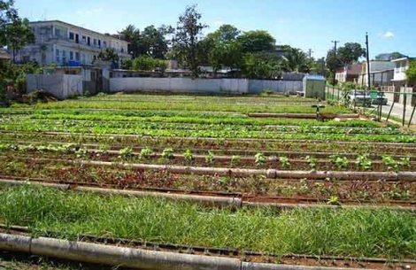Cuba's Urban Farming Shows Way to AvoidHunger