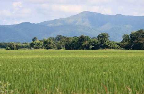 Venezuela Produces 95% of the Rice itConsumes